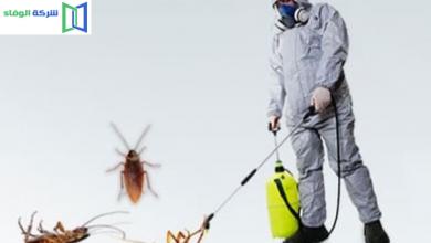 شركة مكافحة حشرات بجدة