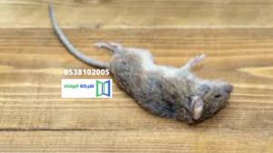 طرق مبتكرة للقضاء على الفئران